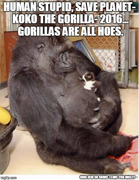 but humans ARE stupid though | HUMAN STUPID, SAVE PLANET- KOKO THE GORILLA- 2016... GORILLAS ARE ALL HOES. OMG I AM SO SORRY, I LOVE YOU REALLY | image tagged in gorilla,humans are dumb,koko,lol,get rekt | made w/ Imgflip meme maker