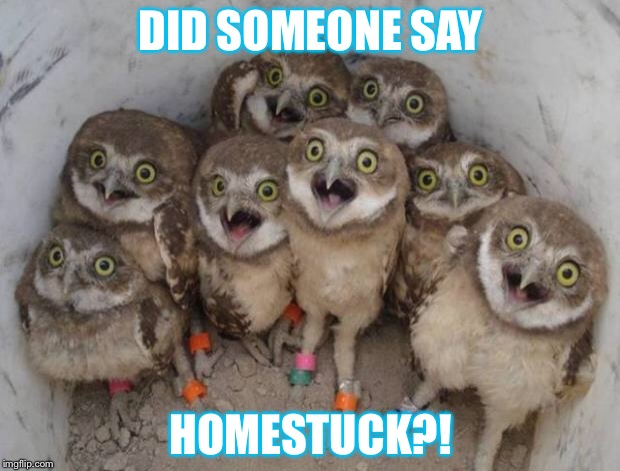 Excited Owls | DID SOMEONE SAY HOMESTUCK?! | image tagged in excited owls | made w/ Imgflip meme maker