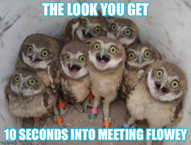 Excited Owls | THE LOOK YOU GET 10 SECONDS INTO MEETING FLOWEY | image tagged in excited owls | made w/ Imgflip meme maker