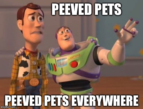 X, X Everywhere Meme | PEEVED PETS PEEVED PETS EVERYWHERE | image tagged in memes,x,x everywhere,x x everywhere | made w/ Imgflip meme maker