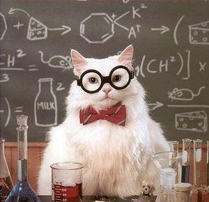 Resultado de imagen para teacher cat