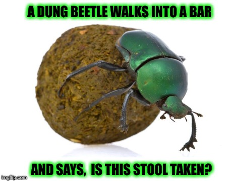Another shitty joke... | A DUNG BEETLE WALKS INTO A BAR AND SAYS,  IS THIS STOOL TAKEN? | image tagged in memes,funny,shitty jokes | made w/ Imgflip meme maker