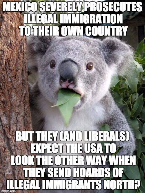 WTF Koala | MEXICO SEVERELY PROSECUTES ILLEGAL IMMIGRATION TO THEIR OWN COUNTRY BUT THEY (AND LIBERALS) EXPECT THE USA TO LOOK THE OTHER WAY WHEN THEY S | image tagged in wtf koala | made w/ Imgflip meme maker