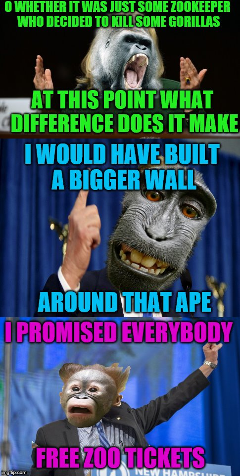 Tragedy as the Primatery season comes to a close, the candidates speak out.  | O WHETHER IT WAS JUST SOME ZOOKEEPER WHO DECIDED TO KILL SOME GORILLAS AT THIS POINT WHAT DIFFERENCE DOES IT MAKE I WOULD HAVE BUILT A BIGGE | image tagged in memes,hillary,trump,sanders | made w/ Imgflip meme maker