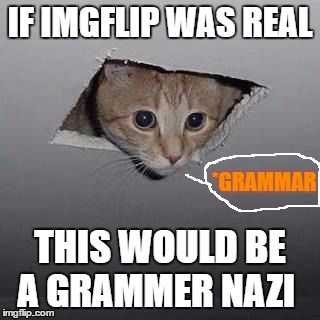 Yeah this how I picture it | IF IMGFLIP WAS REAL THIS WOULD BE A GRAMMER NAZI *GRAMMAR | image tagged in memes,ceiling cat,grammar nazi cat | made w/ Imgflip meme maker