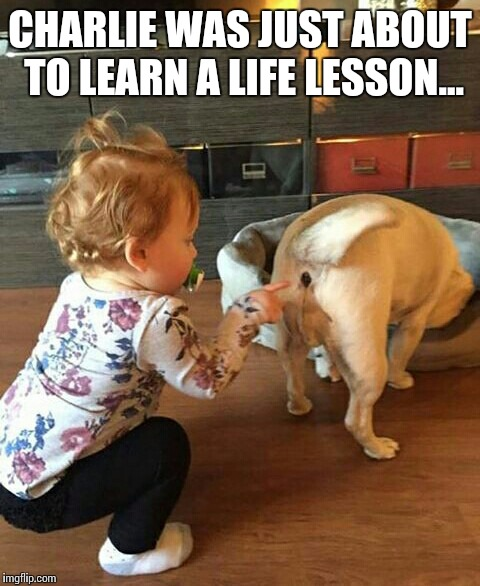 Funny Meme Of Life : Charlie was just about to learn a life lesson imgflip