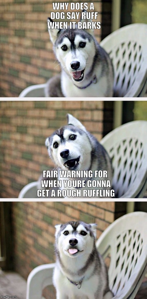 Bad Pun Dog 2 | WHY DOES A DOG SAY RUFF WHEN IT BARKS FAIR WARNING FOR WHEN YOURE GONNA GET A ROUGH RUFFLING | image tagged in bad pun dog 2 | made w/ Imgflip meme maker