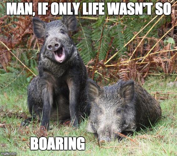Blank Meme Man Boar-dumb - Imgflip
