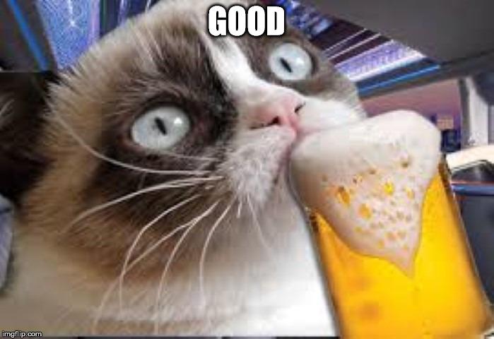 Funny Cat Drinking Meme : Grumpy cat drunk imgflip