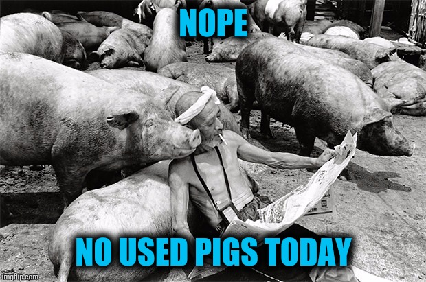 NOPE NO USED PIGS TODAY | made w/ Imgflip meme maker