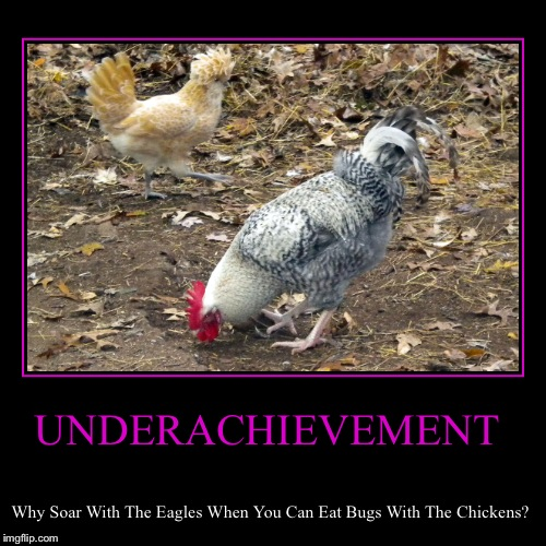UNDERACHIEVEMENT | Why Soar With The Eagles When You Can Eat Bugs With The Chickens? | image tagged in funny,demotivationals | made w/ Imgflip demotivational maker