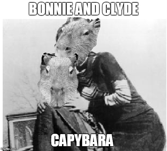 bonnie and clyde capybara | BONNIE AND CLYDE CAPYBARA | image tagged in bonnie and clyde,capybara,bonnie and clyde capybara | made w/ Imgflip meme maker