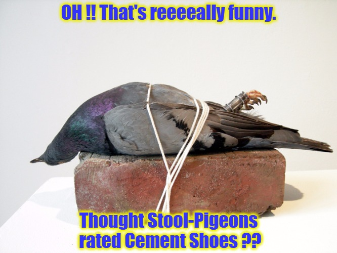 Birds of a Feather, flock together, when your not tied to a BRICK !!! | OH !! That's reeeeally funny. Thought Stool-Pigeons rated Cement Shoes ?? | image tagged in pigeons,birds,bird | made w/ Imgflip meme maker
