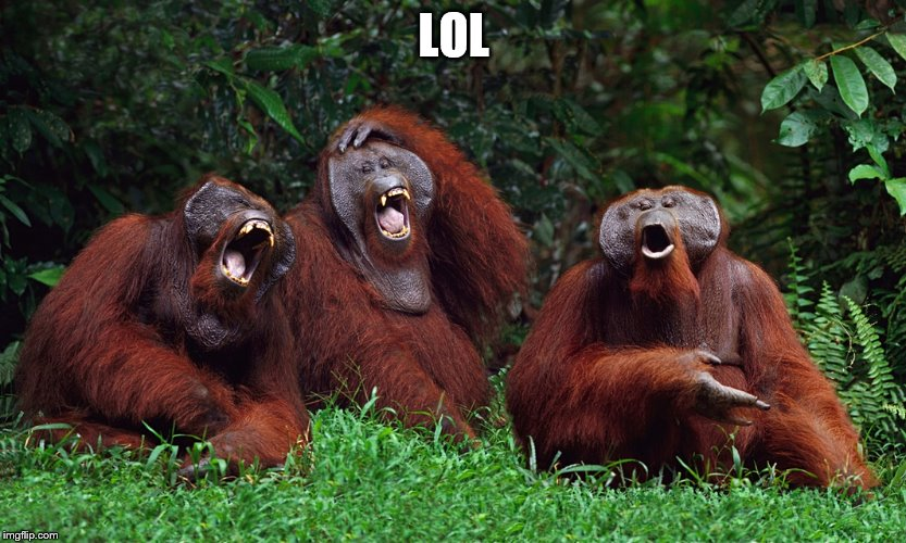 laughing orangutans | LOL | image tagged in laughing orangutans | made w/ Imgflip meme maker