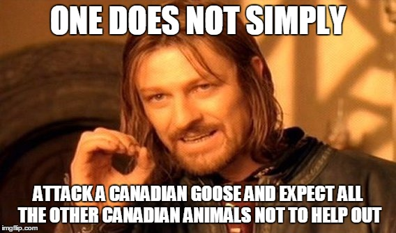 One Does Not Simply Meme | ONE DOES NOT SIMPLY ATTACK A CANADIAN GOOSE AND EXPECT ALL THE OTHER CANADIAN ANIMALS NOT TO HELP OUT | image tagged in memes,one does not simply | made w/ Imgflip meme maker