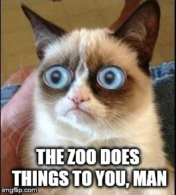 Grumpy Cat Shocked | THE ZOO DOES THINGS TO YOU, MAN | image tagged in grumpy cat shocked | made w/ Imgflip meme maker