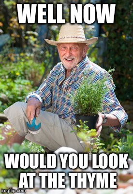 Herb in the Garden |  WELL NOW; WOULD YOU LOOK AT THE THYME | image tagged in herb in the garden,memes,garden,gardening,puns | made w/ Imgflip meme maker