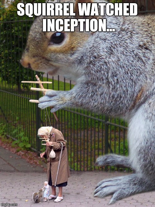 SQUIRREL WATCHED INCEPTION... | image tagged in squirrels,inception | made w/ Imgflip meme maker