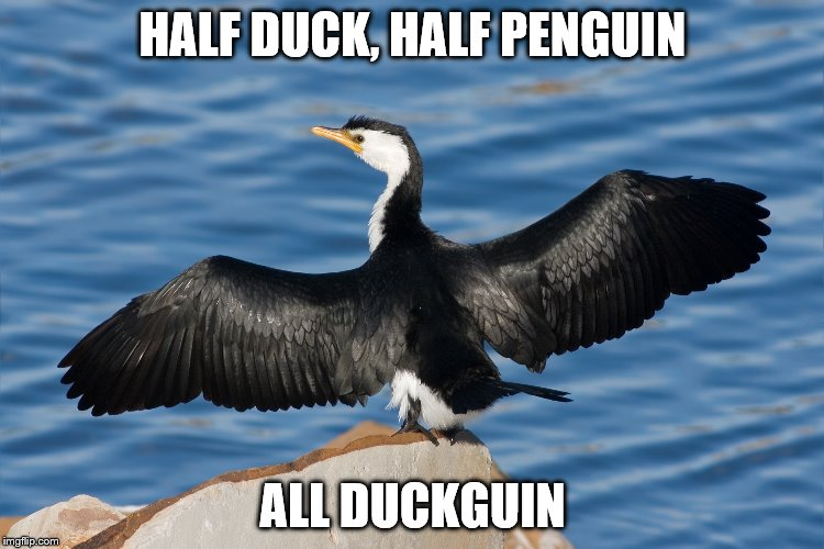 Duckguin | HALF DUCK, HALF PENGUIN ALL DUCKGUIN | image tagged in duckguin | made w/ Imgflip meme maker