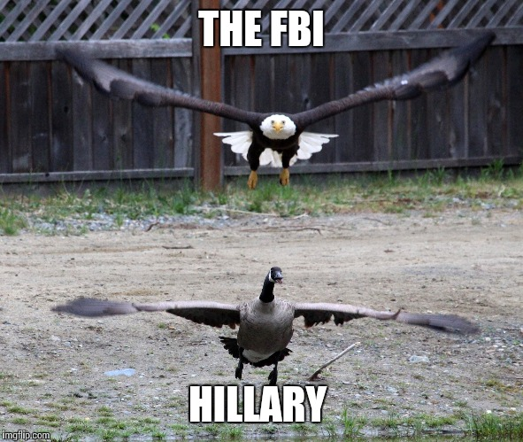 Pretty much sums it up | THE FBI HILLARY | image tagged in memes,hillary clinton | made w/ Imgflip meme maker