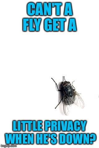 CAN'T A FLY GET A LITTLE PRIVACY WHEN HE'S DOWN? | made w/ Imgflip meme maker