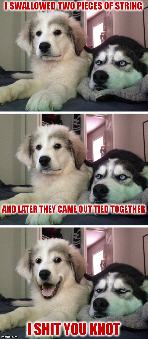Bad pun dogs | I SWALLOWED TWO PIECES OF STRING I SHIT YOU KNOT AND LATER THEY CAME OUT TIED TOGETHER | image tagged in bad pun dogs | made w/ Imgflip meme maker