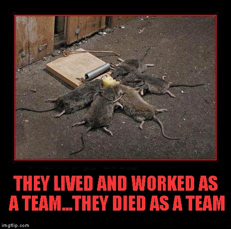 Teamwork...sharing the victories as well as the defeats. |  THEY LIVED AND WORKED AS A TEAM...THEY DIED AS A TEAM | image tagged in teamwork,memes,mice,funny,funny animals | made w/ Imgflip meme maker