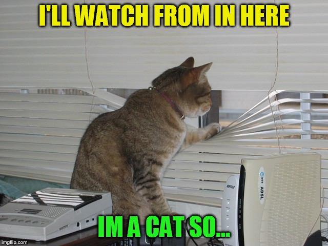 I'LL WATCH FROM IN HERE IM A CAT SO... | made w/ Imgflip meme maker