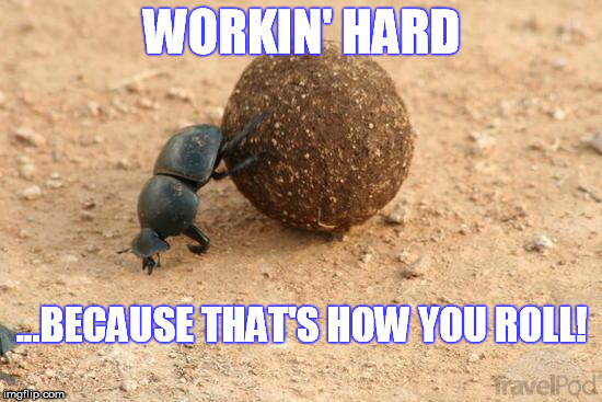 That's How You Roll | WORKIN' HARD ...BECAUSE THAT'S HOW YOU ROLL! | image tagged in hard working dung beetle,how i roll,how you roll,hard work,effort,persistence | made w/ Imgflip meme maker