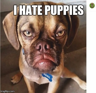 I HATE PUPPIES | made w/ Imgflip meme maker