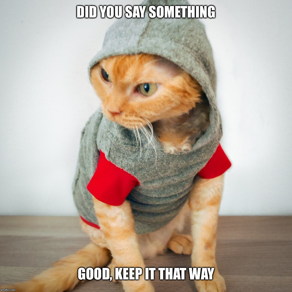 Thug Cat | DID YOU SAY SOMETHING GOOD, KEEP IT THAT WAY | image tagged in thug life,cat | made w/ Imgflip meme maker
