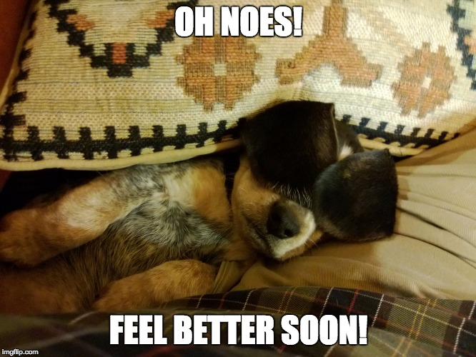 oh noes beagle |  OH NOES! FEEL BETTER SOON! | image tagged in beagle,dog | made w/ Imgflip meme maker