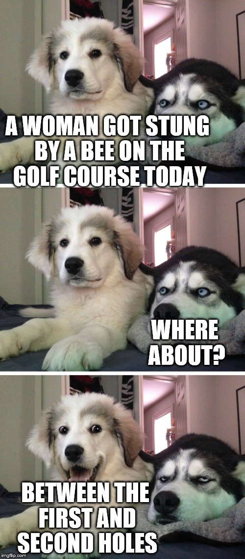 She was feeling a bit under par... | A WOMAN GOT STUNG BY A BEE ON THE GOLF COURSE TODAY BETWEEN THE FIRST AND SECOND HOLES WHERE ABOUT? | image tagged in bad pun dogs,memes,sport,golf,bees | made w/ Imgflip meme maker