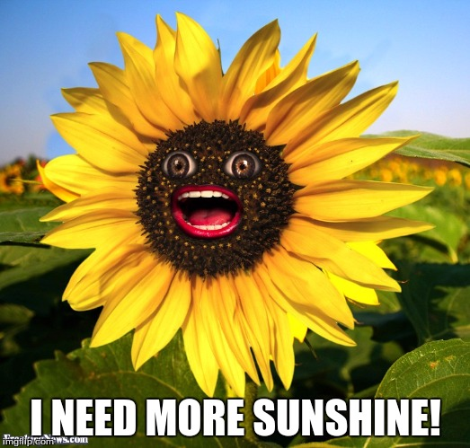 I NEED MORE SUNSHINE! | made w/ Imgflip meme maker