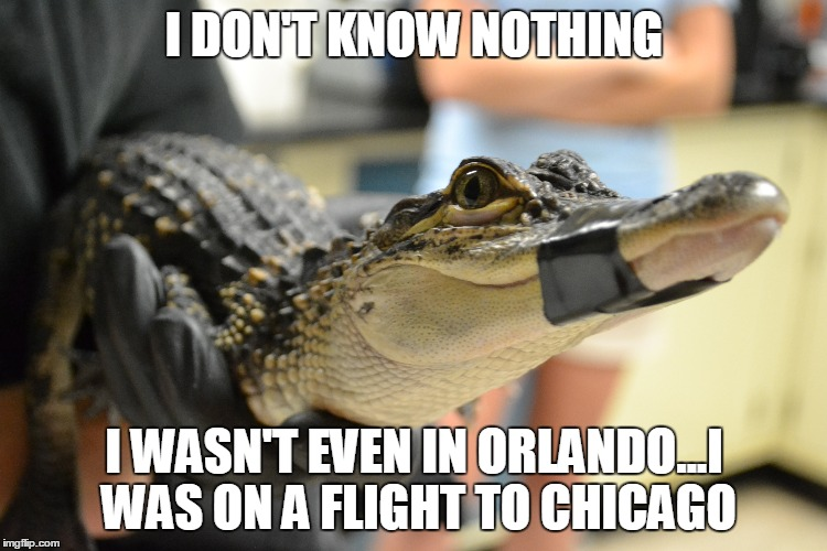 I DON'T KNOW NOTHING I WASN'T EVEN IN ORLANDO...I WAS ON A FLIGHT TO CHICAGO | image tagged in alligator,orlando,disney,scandal,florida sunrise | made w/ Imgflip meme maker