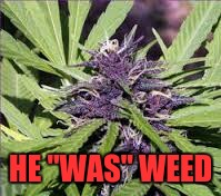 "HE ""WAS"" WEED 