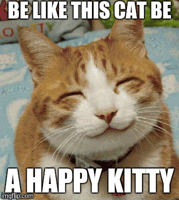 Happy Cat Smiling | BE LIKE THIS CAT BE A HAPPY KITTY | image tagged in happy cat smiling | made w/ Imgflip meme maker