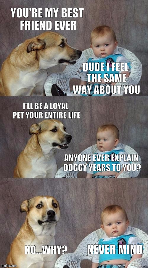 15zay1 dad joke dog meme imgflip