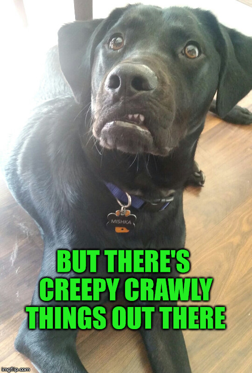 BUT THERE'S CREEPY CRAWLY THINGS OUT THERE | made w/ Imgflip meme maker