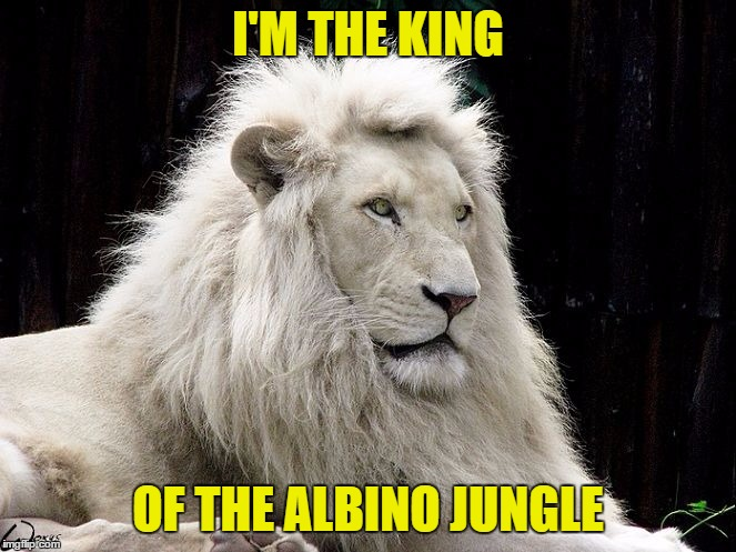 I'M THE KING OF THE ALBINO JUNGLE | made w/ Imgflip meme maker
