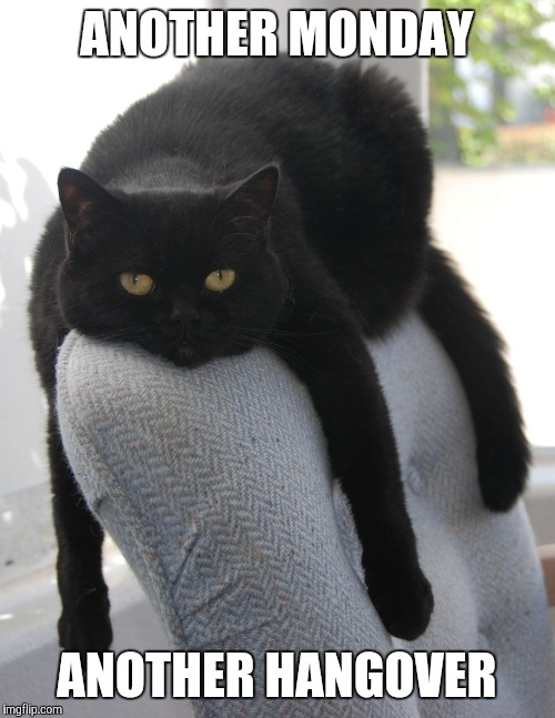 Draped Cat Be Like | ANOTHER MONDAY ANOTHER HANGOVER | image tagged in black cat draped on chair,draped cat,another monday another hangover | made w/ Imgflip meme maker