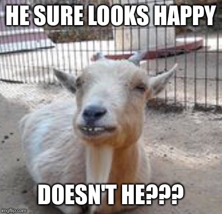 HE SURE LOOKS HAPPY DOESN'T HE??? | made w/ Imgflip meme maker