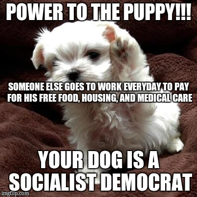 Don't like dogs | POWER TO THE PUPPY!!! YOUR DOG IS A SOCIALIST DEMOCRAT SOMEONE ELSE GOES TO WORK EVERYDAY TO PAY FOR HIS FREE FOOD, HOUSING, AND MEDICAL CAR | image tagged in don't like dogs | made w/ Imgflip meme maker