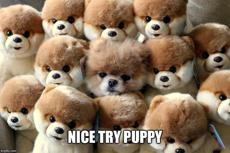 NICE TRY PUPPY | made w/ Imgflip meme maker