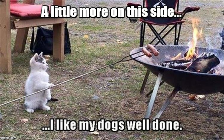 Image result for cats cooking meme