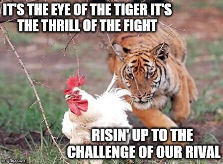 And the last known survivorStalks his prey in the nightAnd he's watching us all with theEye of the tiger.., | IT'S THE EYE OF THE TIGERIT'S THE THRILL OF THE FIGHT RISIN' UP TO THE CHALLENGEOF OUR RIVAL | image tagged in memes,animals,eye of the tiger,looks like chicken tonight | made w/ Imgflip meme maker