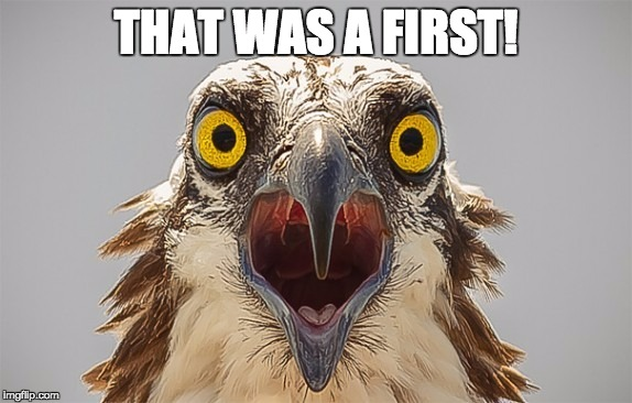 say what bird | THAT WAS A FIRST! | image tagged in say what bird | made w/ Imgflip meme maker