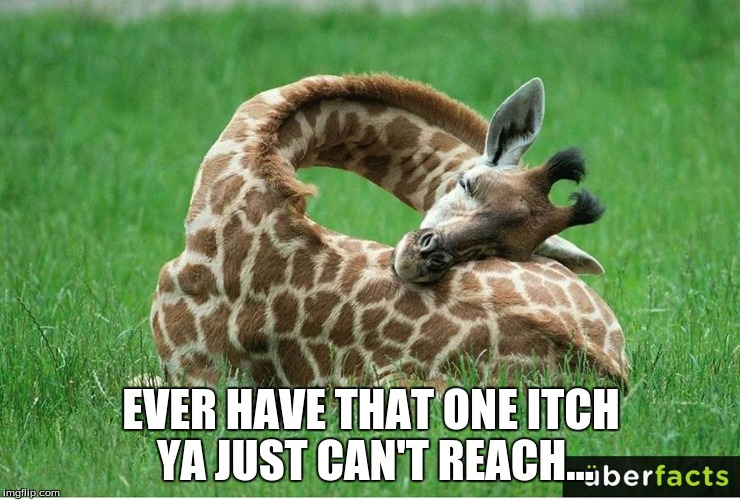 EVER HAVE THAT ONE ITCH YA JUST CAN'T REACH... | image tagged in pet humor | made w/ Imgflip meme maker