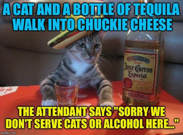Bottle Flip Meme Cat