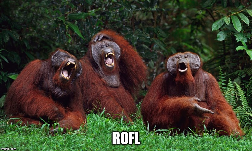laughing orangutans | ROFL | image tagged in laughing orangutans | made w/ Imgflip meme maker